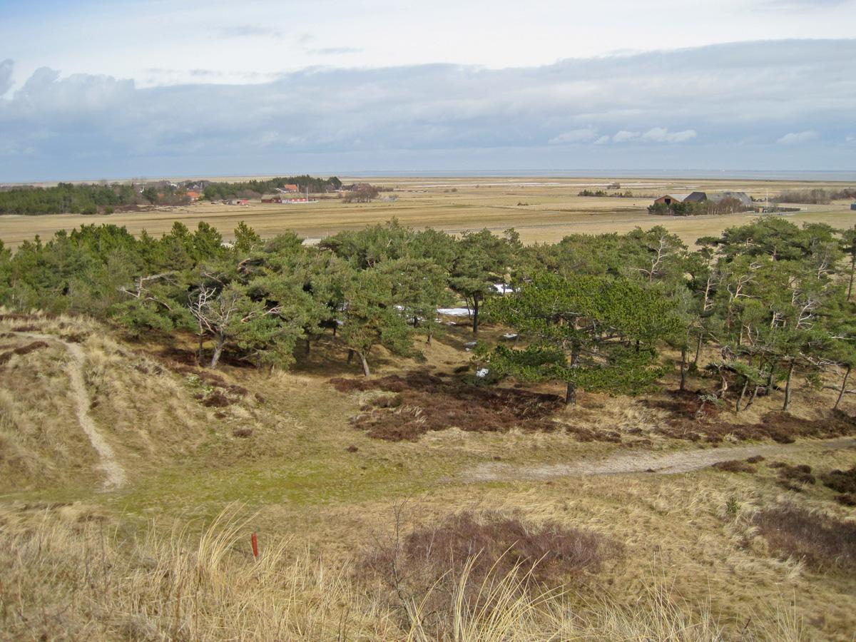 Einsames Ostland auf der Insel Borkum