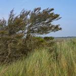 Wind und Wetter prägen die Dünenlandschaft von Fanø.