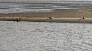 Seehundsafari auf Fano