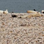 Seehunde an der Nordseeküste