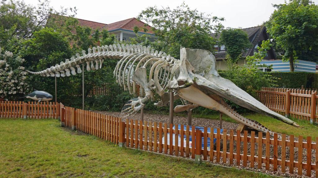 Walskelett vor dem Nationalpark-Haus Rosenhaus