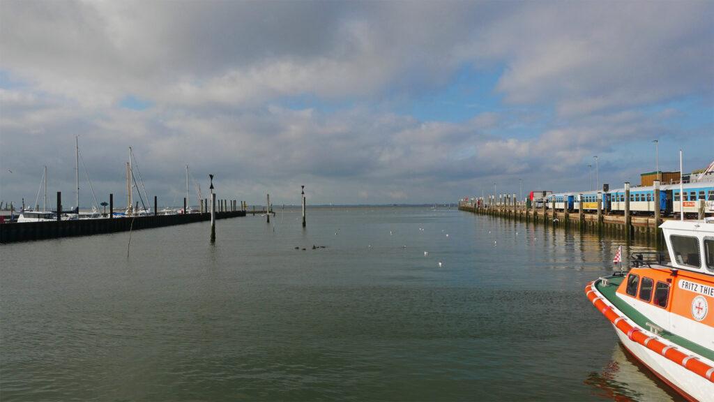 Möwen erobern das Hafenbecken